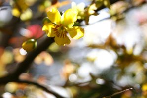 Yellow Flowers5 by pisces-hilda