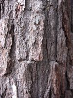 tree bark 4 by kayas-stock