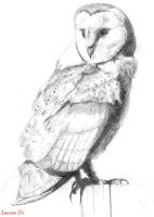 Barn owl- Sketch by YouAreABabeOx