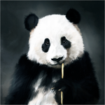 A cute panda by Bjergsen