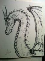 Dragon Sketch by JSkeed