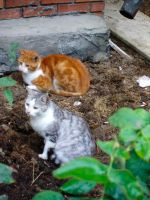 My Stray Cats 2 by selfregion