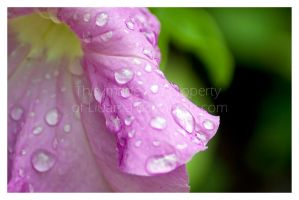 Rain in my garden by Liuanta