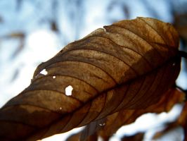 Louisiana - Dried Leaf by iluvobiwan91