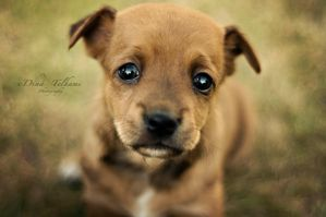 puppy eyes by Dina90T