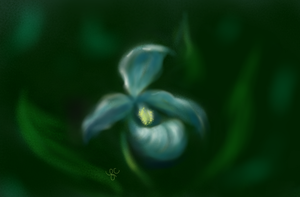 Lady Slippers1 by thepurpleorchid1