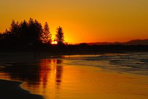Sunset - Byron Bay pines 1 by wildplaces