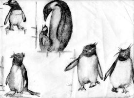 Penguin Sketches 1 by PMMurphy
