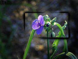 Little Purple Flower by lakura-nightwing