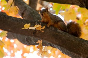 Squirrel by AmblingPhotographer