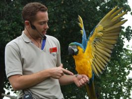 .Macaw wings 2. 1109 by DelinquentDog