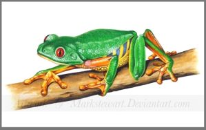 Red eyed tree frog by markstewart