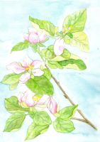 Watercolor peartree blossom by JettieHier
