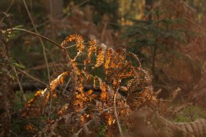 Glowing Fern by Rick-TinyWorlds