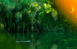 Green Lake by MARCOSVFG