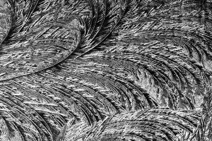 feathers by augenweide