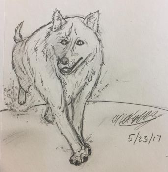 Wolf running practice  by ansem-the-dead