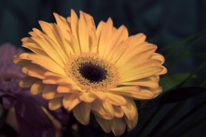 flower: yellow 2 by elisafox-stock
