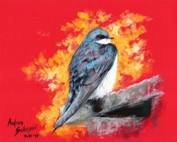 Tree swallow - oil by AndreaSchepisi