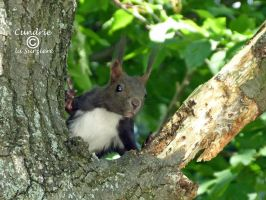 Squirrel 140 by Cundrie-la-Surziere
