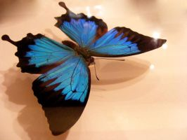 moths and butterflies stock128 by hatestock