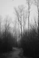 The path is never black and white by darkguitar3000