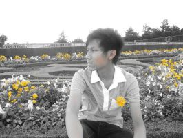 Yellow Garden by timmieee
