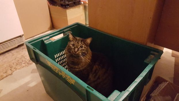 Boomer in a Box by Mickeymcp