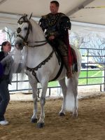 Gray Andalusian Stallion 001 by diamonte-stock