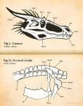 Introduction to Dragon Skeletal Anatomy by Osmatar