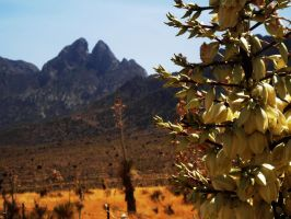 Yucca and the Organ Mountains by SharPhotography