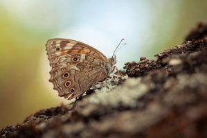 Resting by Zelma1