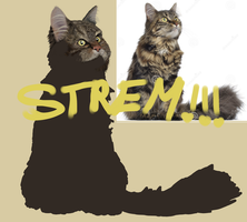 Stream!! [Online!] by AngelInTheHeart