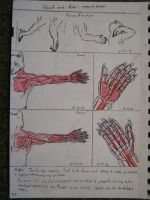 On werewolves - Anatomy section preview by jmillart