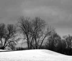 Early December Snow Scene bw by M922