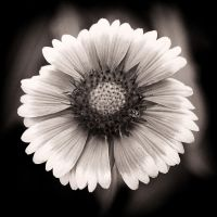 Flore 1... by mikper