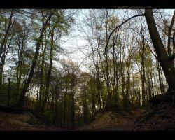 Old Pagan Place In The Woods by Waldeck