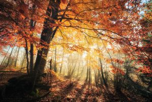Radiance by FlorentCourty