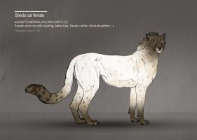 Shedu cat female 172 by Templado