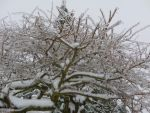 Ice covered branches7 by Poorartman