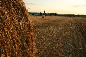 Hay bale rolls at dusk by evilqueen112