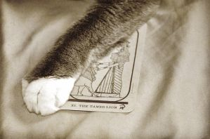 Cat's Reading by GrimFay