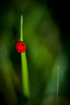 Lady on green by tbensic