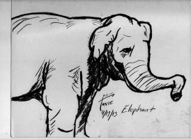 The Elephant by tonizatiga