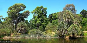 Royal Botanic Gardens, Melbourne 7 by Okavanga