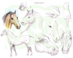 Horse sketches by sealle
