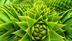Prickle by SP4RTI4TE