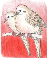Birds Series I - Mourning Dove by TheSolitarySandpiper