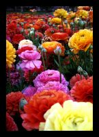 Carnival of Flowers by lounasee