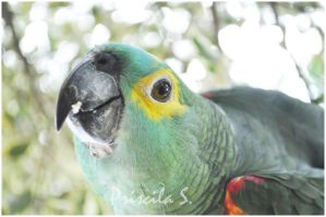 Parrot by Decode-That